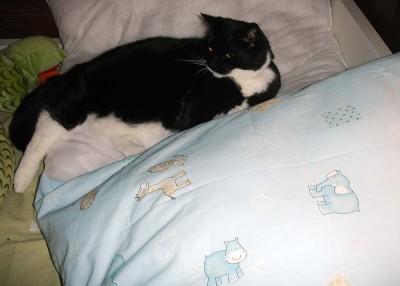 En riktig kudde och en luddig.